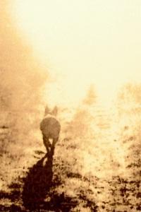 dusha-zhivotnyh-