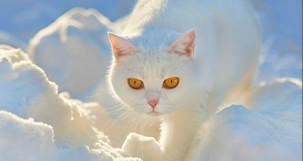 кот ангел хранитель