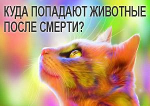 Стал котом после смерти