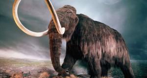 Ученые решили возродить мамонта
