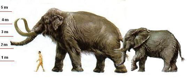 Мамонт, африканский слон и человек