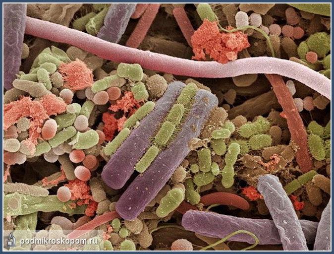 Язык кошки под микроскопом