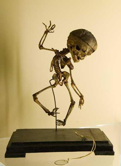 живые скелеты фото